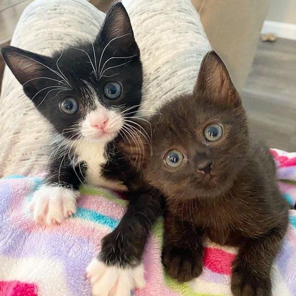 Unas gatitas se convierten en las más dulces amigas de unos cachorros