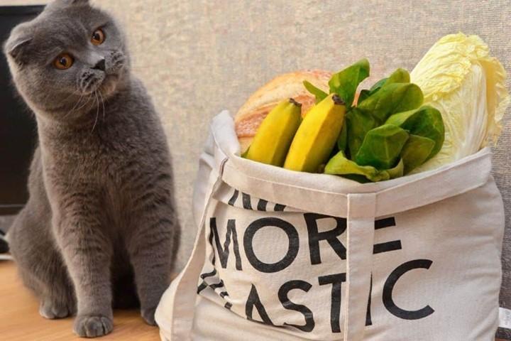4 formas de reducir el plástico de nuestras mascotas