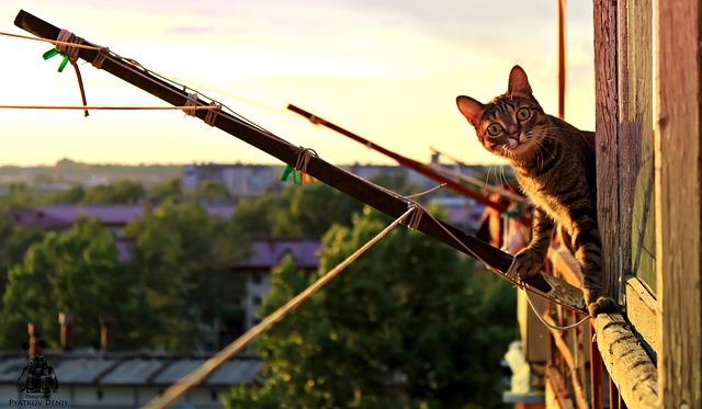 ¿Saltará mi gato del balcón?  ¿Debo vigilarlo?
