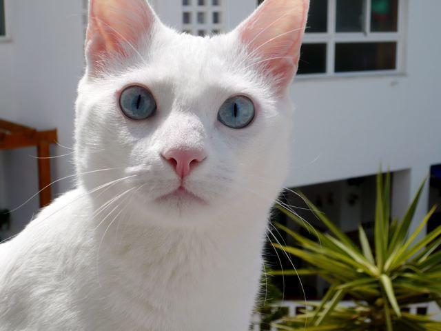 Cómo comunicarte con tu gato sordo