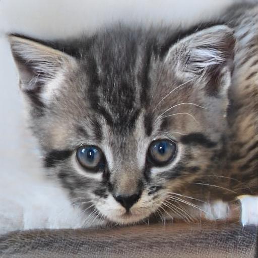 Gatos salvajes: qué hacer si viven cerca de ti
