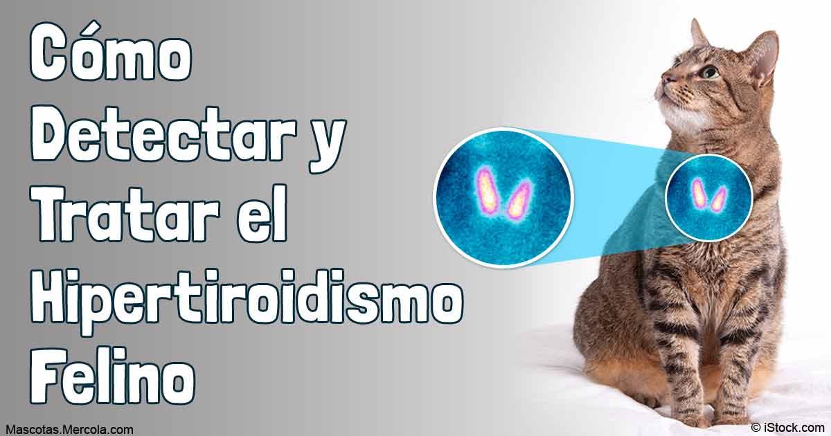 Remedios caseros para el hipertiroidismo en gatos