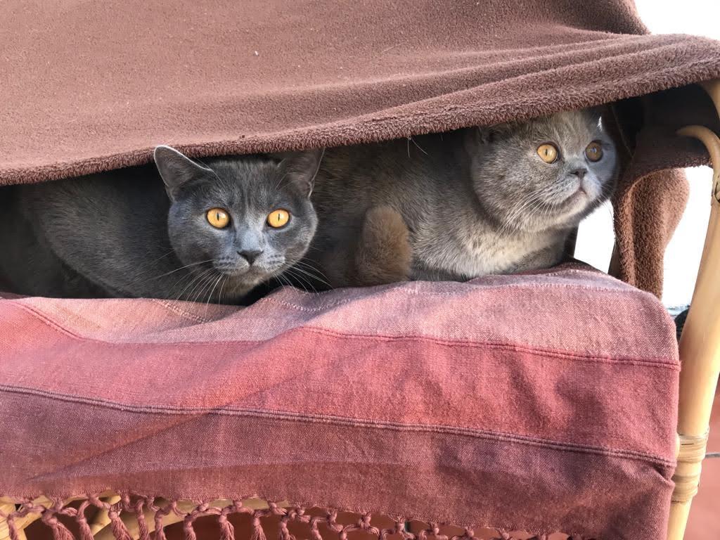 Guía definitiva sobre los problemas de comportamiento de los gatos y cómo ayudarlos