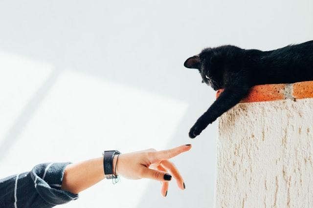 Las 6 razas de gatos más amigables con los extraños