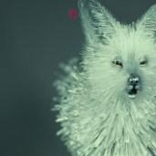Ice dog/fox? (TLJ BTS)