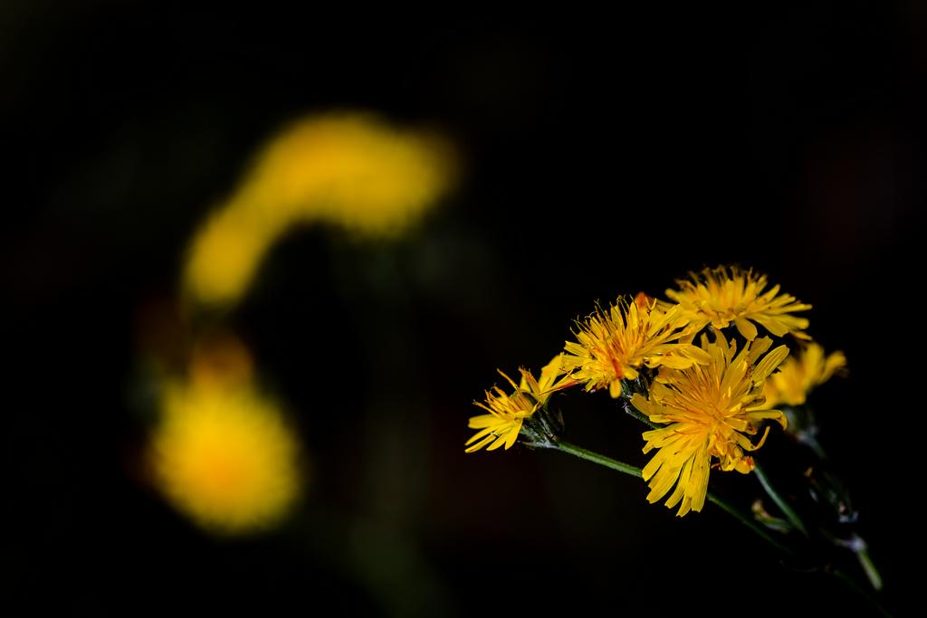 08. Flores amarillas