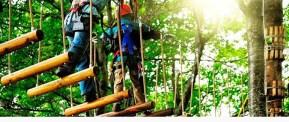 Imagen de excursionistas en el bosque suspendido