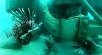 sri lanka underwater museum trinco sandy bay beach east coast dive (13)