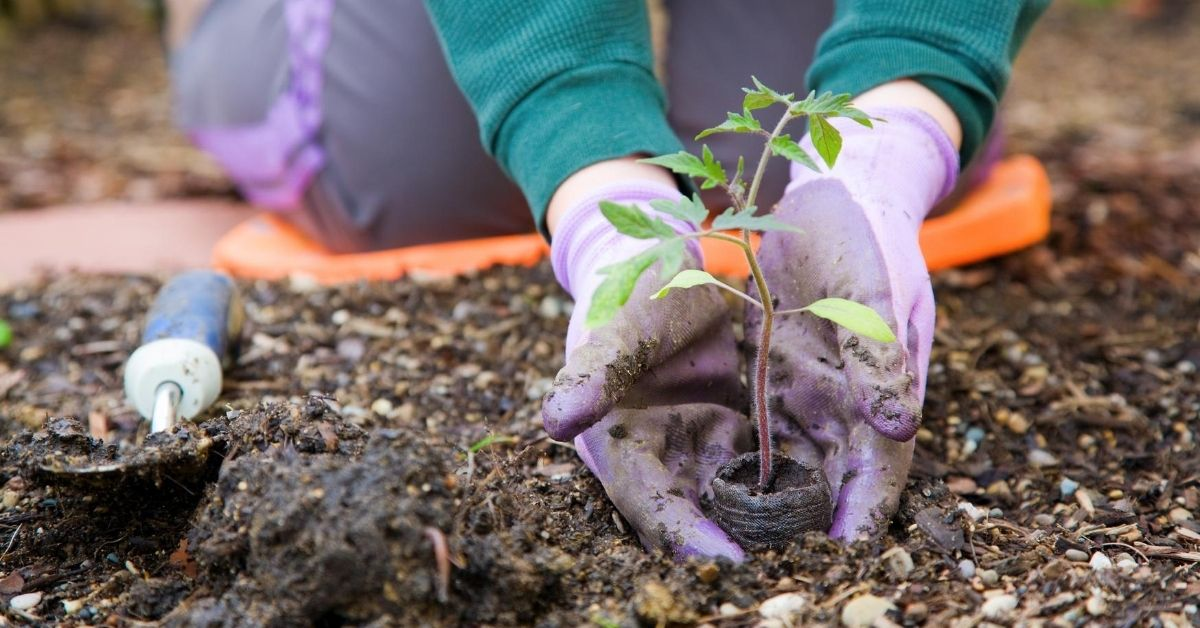 Spring Into Savings With These Money Saving Tips - picture of gardener planting