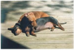 Pet Insurance: A Tale of Two Pets