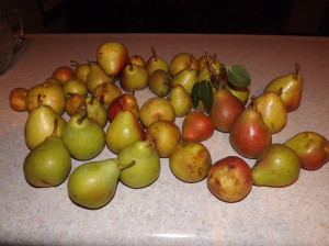 Here are the pears we ended up with.....