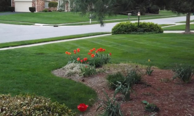 Keeping Up With the Joneses: Our Frugal Yard Remodel