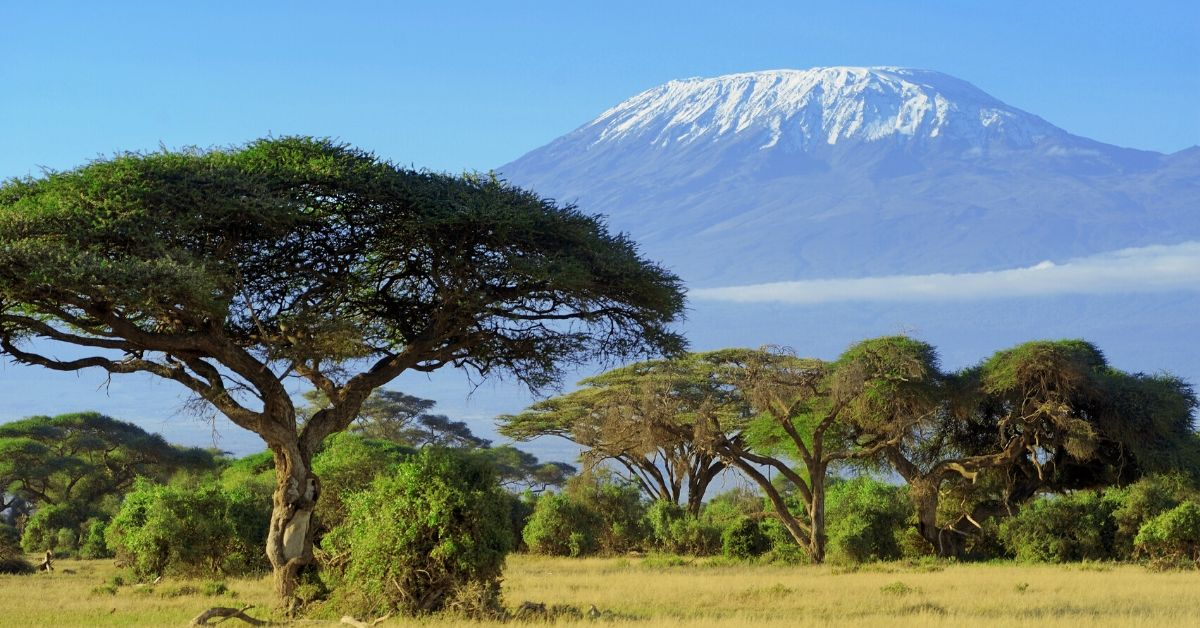 Why Spend $50,000 to Shoot Things in Africa - picture of African trees with Mount Kilimanjaro in background