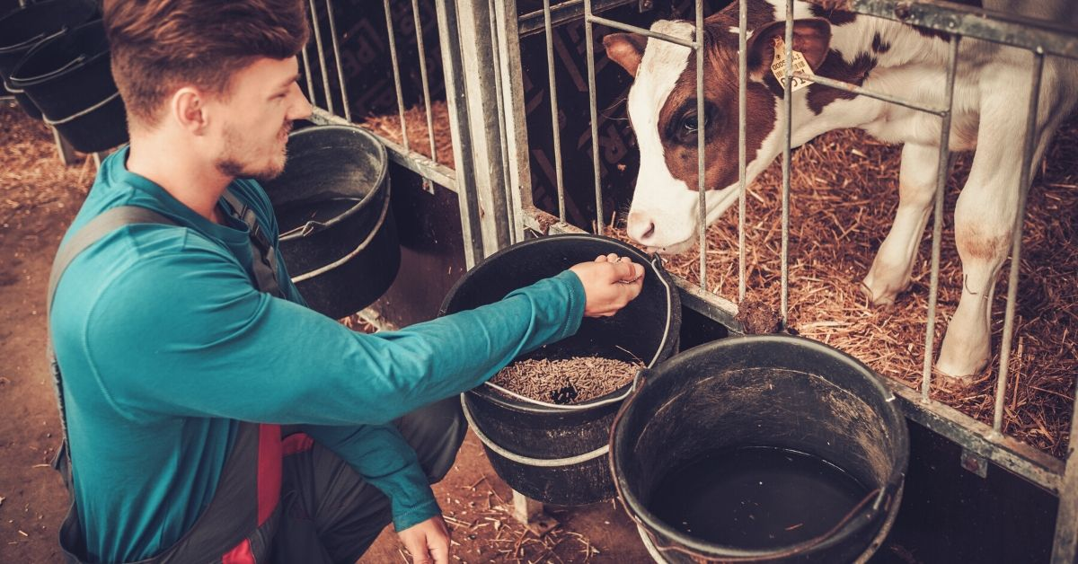 4 of My Most Interesting Side Hustles - picture of man feeding cow