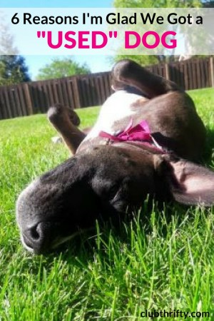 """Although we didn't get the type of dog we intended, we ended up with the best dog for us. Here are 6 reasons I'm glad we adopted and got a """"used"""" dog!"""