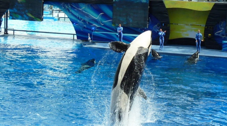 Southern California CityPASS - photo of killer whale jumping