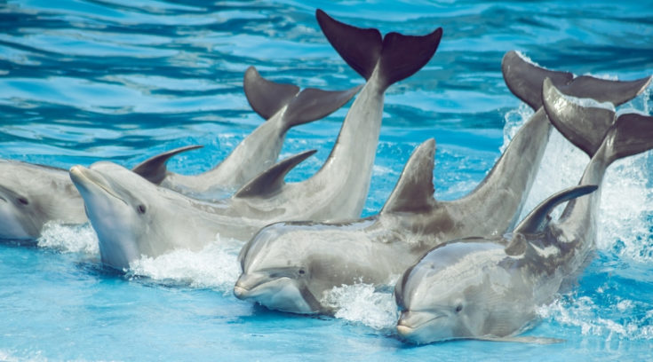 Photo of dolphin show