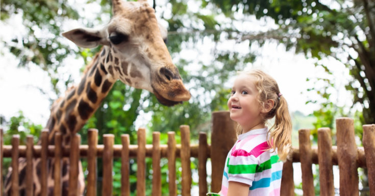 California Explorer Pass Review - picture of child with giraffe at zoo
