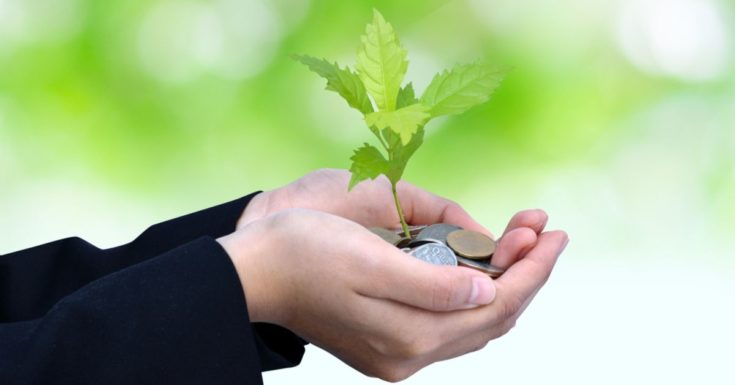Best Money Market Accounts - picture of hands holding small tree growing from coins