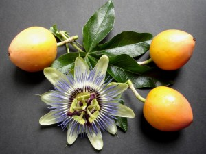 passionflower or the maypop