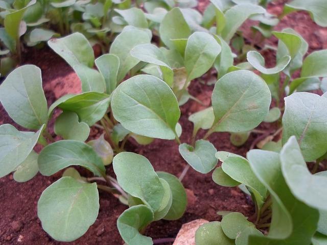 Create a 30 Day Garden