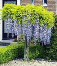 Comfy Flowering Tree Design Ideas For Your Home Yard02