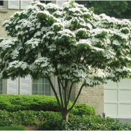 Comfy Flowering Tree Design Ideas For Your Home Yard04