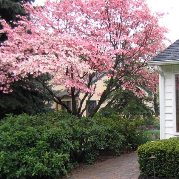 Comfy Flowering Tree Design Ideas For Your Home Yard14