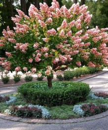Comfy Flowering Tree Design Ideas For Your Home Yard22