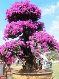 Comfy Flowering Tree Design Ideas For Your Home Yard24
