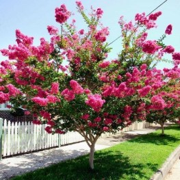 Comfy Flowering Tree Design Ideas For Your Home Yard26