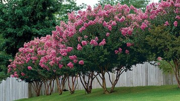 Comfy Flowering Tree Design Ideas For Your Home Yard31