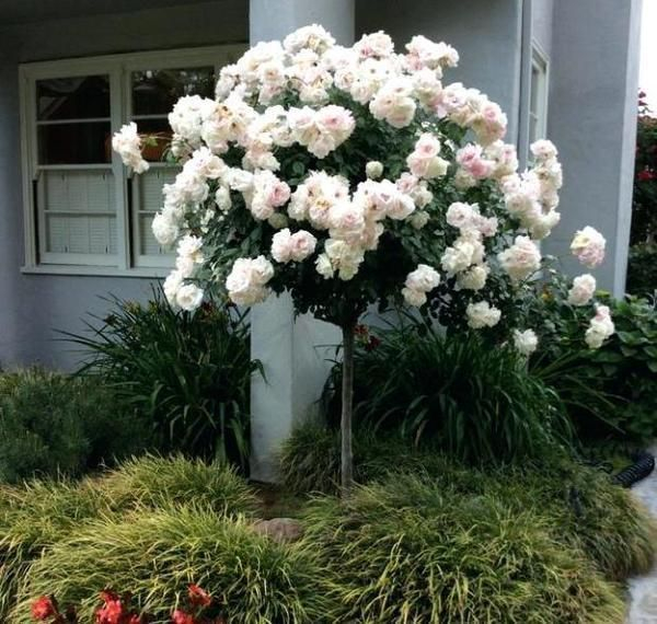 Comfy Flowering Tree Design Ideas For Your Home Yard34