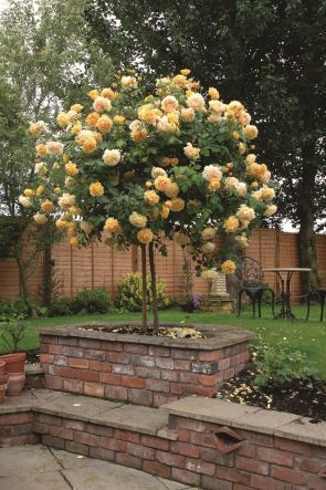 Comfy Flowering Tree Design Ideas For Your Home Yard35