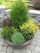 Sophisticated Container Garden Flower Ideas For This Winter To Try01