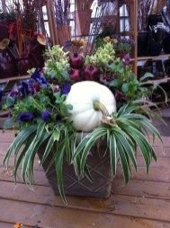 Sophisticated Container Garden Flower Ideas For This Winter To Try16