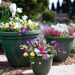 Sophisticated Container Garden Flower Ideas For This Winter To Try24
