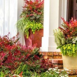 Sophisticated Container Garden Flower Ideas For This Winter To Try29