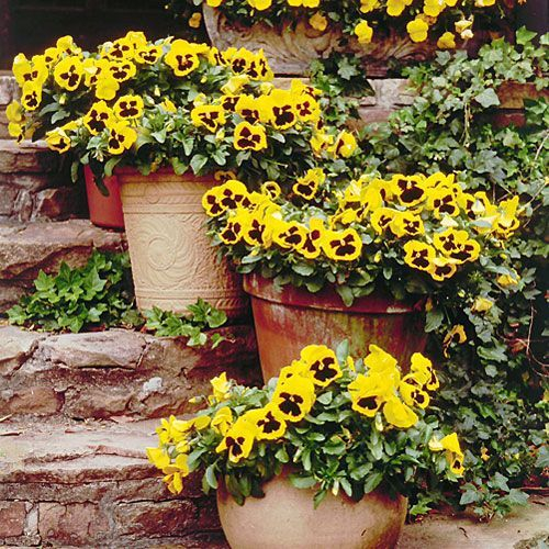 Sophisticated Container Garden Flower Ideas For This Winter To Try33