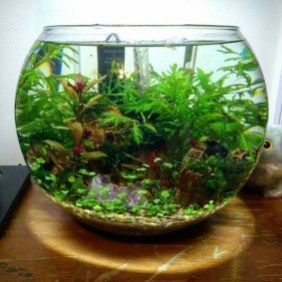 Awesome Indoor Water Garden Design Ideas That Refresh Your Interiors08