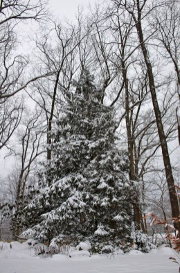 Delicate Multiple Winter Tree Design Ideas To Try Asap06
