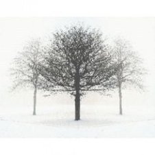 Delicate Multiple Winter Tree Design Ideas To Try Asap20