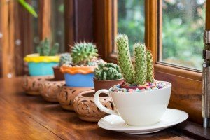 Fascinating Indoor Plants Design Ideas With Desert Atmosphere To Have01