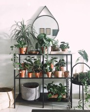 Fascinating Indoor Plants Design Ideas With Desert Atmosphere To Have06