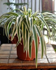 Fascinating Indoor Plants Design Ideas With Desert Atmosphere To Have07