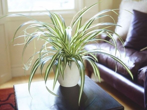 Fascinating Indoor Plants Design Ideas With Desert Atmosphere To Have18