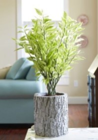 Fascinating Indoor Plants Design Ideas With Desert Atmosphere To Have23