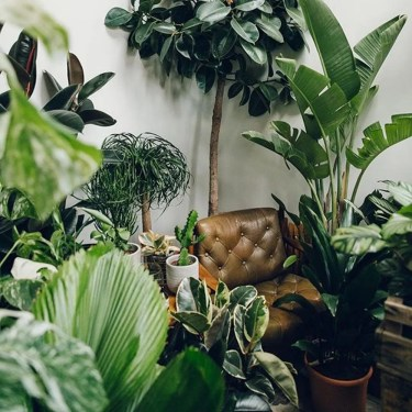 Lovely Indoor Jungle Decor Ideas To Try Asap06