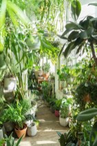 Lovely Indoor Jungle Decor Ideas To Try Asap09