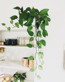 Unusual Indoor Garden Design Ideas With Scandinavian Style To Have14